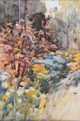 Eschscholzias & Rose Tree, Paraparaumu